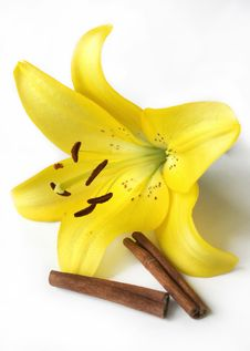 Free Yellow Lily And Two Cinnamon Sticks Stock Photo - 8303350