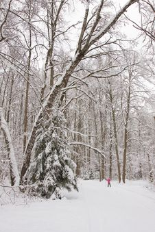 Beautiful Winter Landscape And Girl Skiing Royalty Free Stock Photography