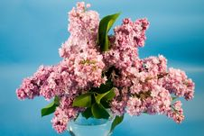 Bouquet Of Lilac Royalty Free Stock Image