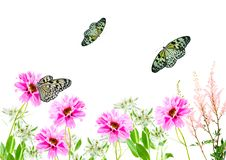 Free Flowers And Butterflies Stock Photography - 8306332
