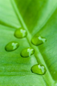 Free Green Sheet Background With Raindrops. Close Up Royalty Free Stock Images - 8306439