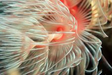 Free Christmas Tree Worms Stock Photos - 8308133