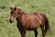 Free Horse Stock Photography - 8309162
