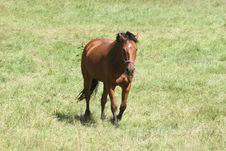 Free Horse Stock Photo - 8309170