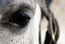 Free Horse Eye Royalty Free Stock Photography - 8309177