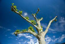 Free Tree Royalty Free Stock Photo - 8309455
