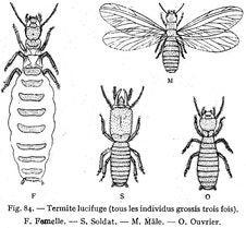 Free Termites Stock Image - 83001461