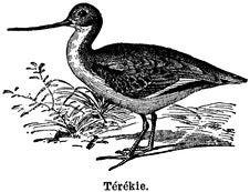 Free Térékie Stock Photos - 83003383