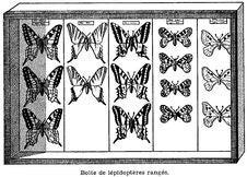 Free Boîte-papillons Royalty Free Stock Photos - 83006558