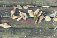 Free Wilted Leaves On Brown Wooden Surface Royalty Free Stock Photography - 83008357