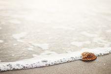 Free Seashell On Beach Stock Photography - 83008452