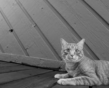 Free Domestic Cat On Wooden Walk Royalty Free Stock Photography - 83008657