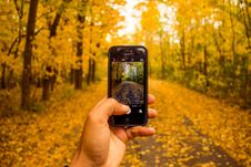 Free Smartphone Photographing Fall Foliage Stock Image - 83008821