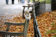 Free Squirrel On Bench In Autumn Stock Photo - 83008880