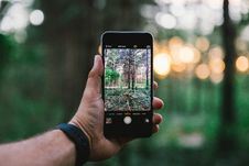 Free Person Taking Picture Of Bare Trees Stock Images - 83008904