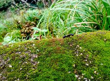 Free Black Ant On Green Linear Plant Stock Images - 83009224