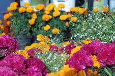 Free Potted Flowers In Store Royalty Free Stock Photography - 83009387