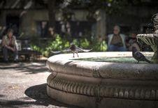 Free Gray Bird Near Water Fountain At Daytime Stock Photos - 83009483