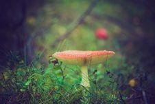 Free Amnita Mushroom In Grass Stock Photography - 83009722