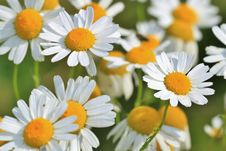 Free Spring Flowers Stock Photos - 83010183