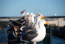 Free Seagulls On Pier Stock Photo - 83010430