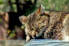 Free Cat Sleeping In Sun Stock Image - 83010501