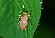 Free White 6 Legged Insect On Green Leaf Royalty Free Stock Photos - 83010508