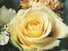 Free Pale Yellow Rose Royalty Free Stock Photos - 83010858