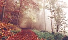 Free Fog In Autumn Forest Royalty Free Stock Photo - 83011855