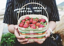 Free Person Holding Basket Of Strawberries Royalty Free Stock Photography - 83012147