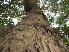 Free Brown Tree Trunk Royalty Free Stock Photos - 83012248