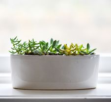 Free Pot With Succulent Plants Stock Image - 83012721