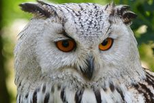 Free White And Black Owl Stock Photos - 83012853
