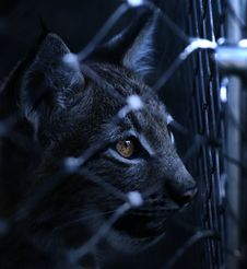 Free Black Cat On Cyclone Wire Fence Stock Photography - 83012942