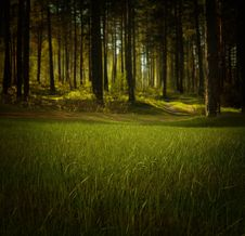 Free Field On The Edge Of The Forest Stock Photography - 83012952