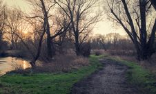 Free Trail Through Trees At Daybreak Stock Images - 83013664