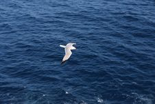 Free Seagull Flying Over Blue Ocean Stock Image - 83013671