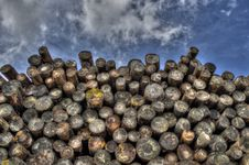 Free Pile Of Cut Logs Stock Photography - 83013702