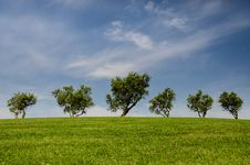 Free Trees On Green Hillside Stock Photos - 83013913
