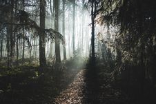 Free Foggy Forest At Dawn Stock Images - 83014054