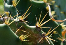 Free Cactus Thorns Stock Photo - 83014090
