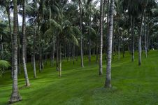 Free Trees On Green Lawn Royalty Free Stock Photos - 83014188