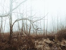 Free Foggy Field And Forest Royalty Free Stock Photos - 83014248