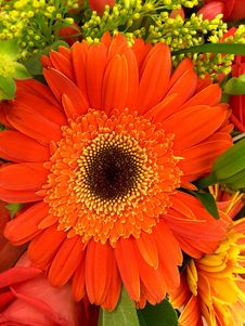Free Orange And Black Petaled Flower In A Close Up Photography During Daytime Stock Photography - 83014262