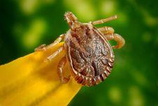 Free Tick On Leaf Stock Image - 83014451