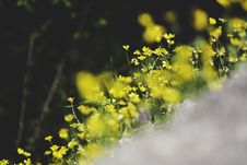 Free Yellow Flowers In Tilt Shift Lens Photography Royalty Free Stock Photo - 83014475