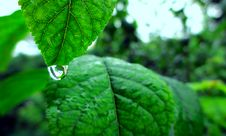 Free Water Drop On Green Leaf Stock Photos - 83014723