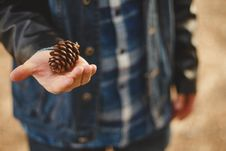 Free Pinecone In Hand Stock Photography - 83014732