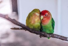 Free Two Birds On Brown Tree Branch Macroshot Photography Stock Photo - 83014850