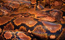 Free Brown And Black Snake Royalty Free Stock Photos - 83015158